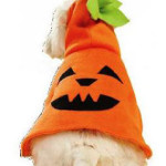 Dog costume pumkin pattern
