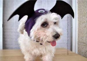 Halloween dog hat