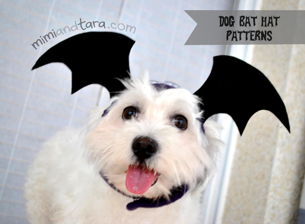 dog bat hat
