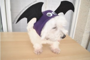bat costume for dog