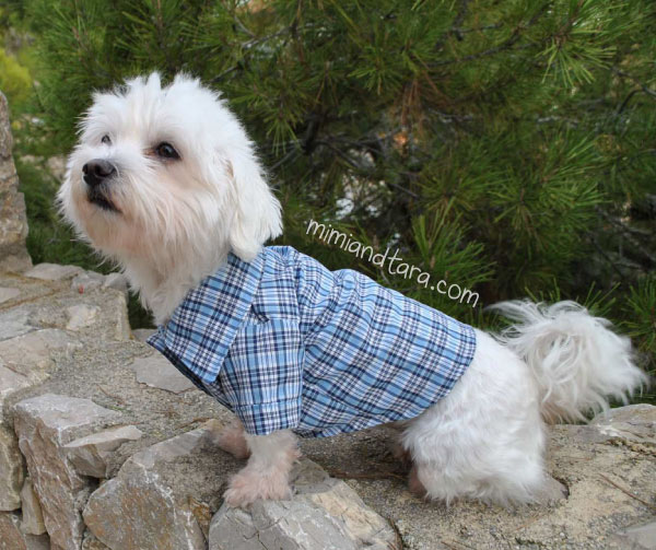 Dog pattern shirt