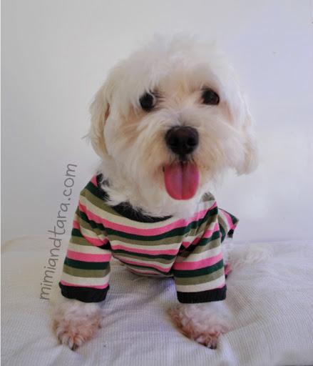 dog pyjama