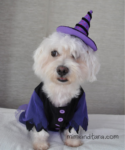 Witch dog costume pattern