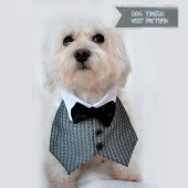 dog tuxedo vest pattern thumb