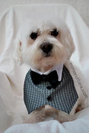 Elegant dog tuxedo vest