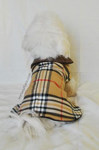 Coat dog