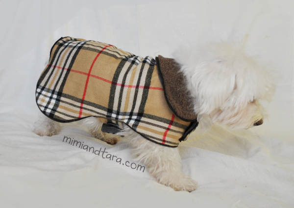 pattern coat dog