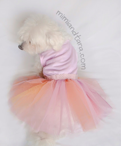 dog with dress