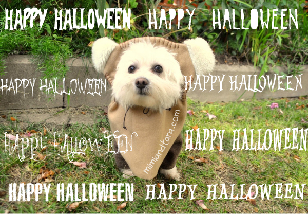 Happy Halloween Ewok