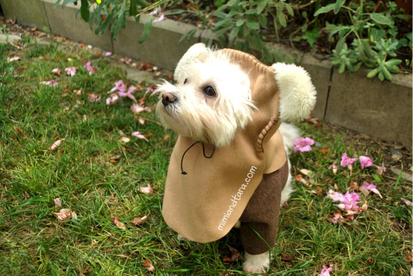 Costume for dog