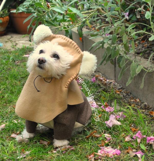 Dog ewok hood