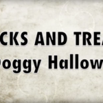 funniest halloween dog video
