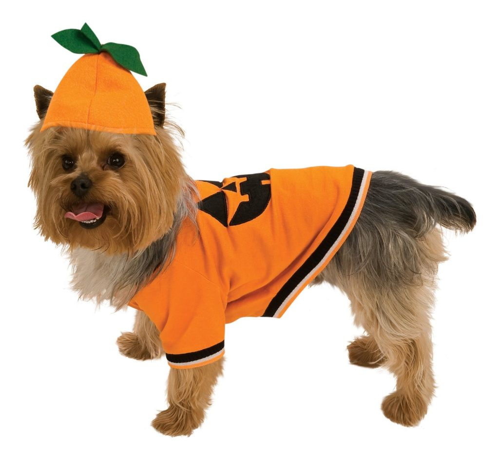 pumkin dog costume