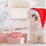Best gifts for dogs and cats