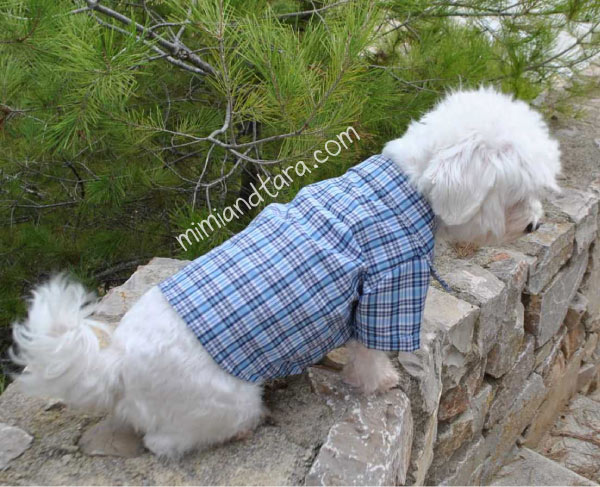 Dog shirt patterns | PDF PATTERN | Mimi & Tara