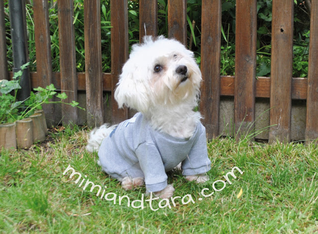 Dog Sweater Pattern Pdf Pattern Mimi Tara
